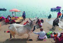 Festa India