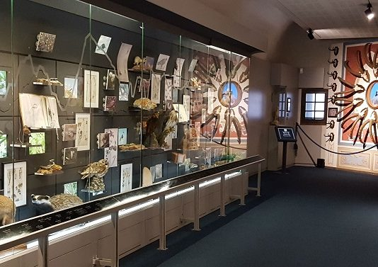 Museo delle Alpi